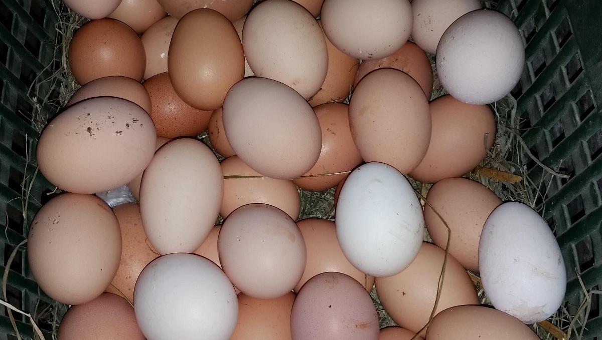 10 bio Eier