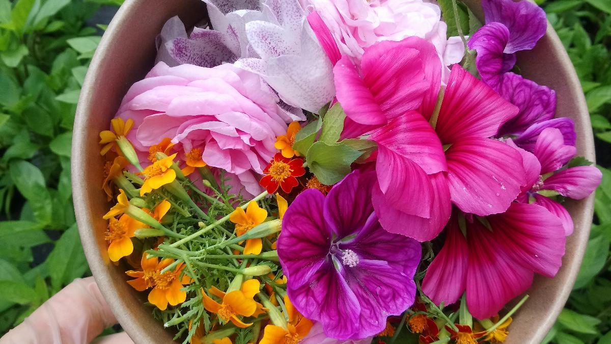 Essbare Blüten Mux