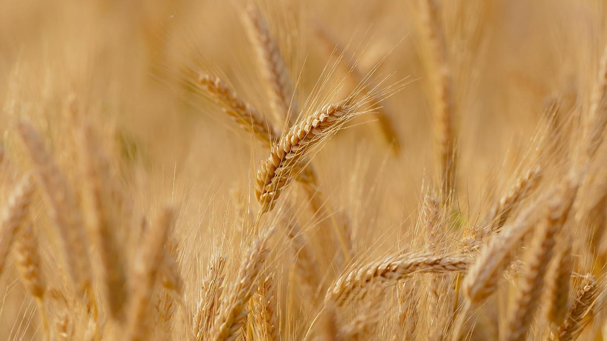 Getreidebrennerei