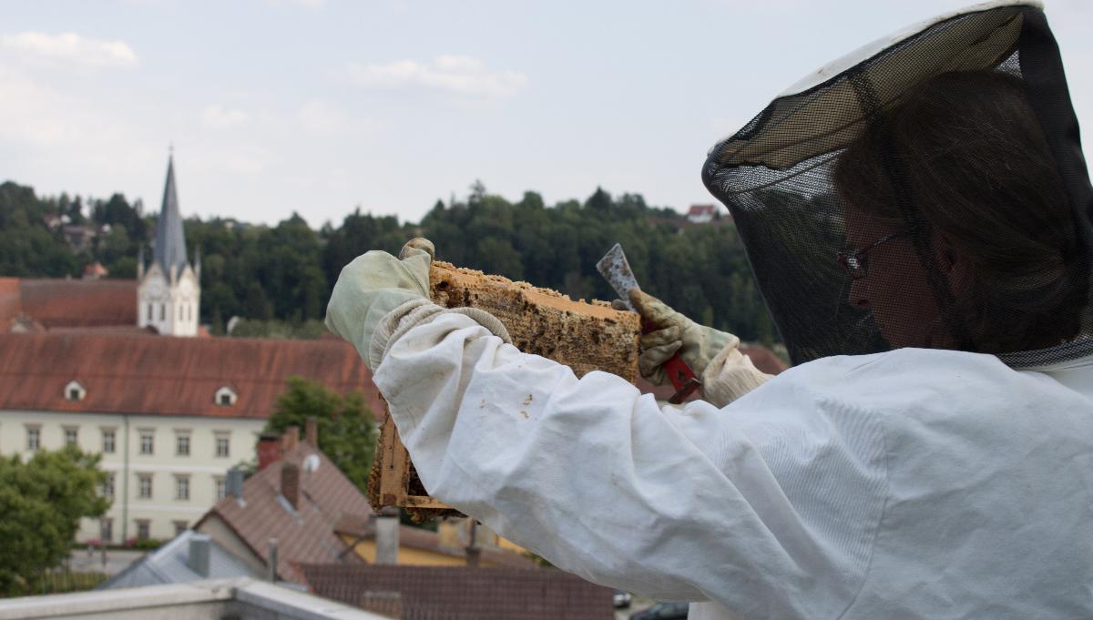 Honig vom Dach